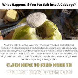 Put Salt into A Cabbage-Lost Book Of Remedies Banner 300X300